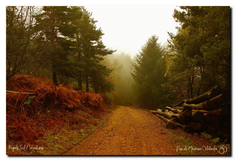 Vous nous suivez en Forêt Bourbonnaise pour encore quelques pas ?