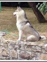 Nouchka (15 mois)