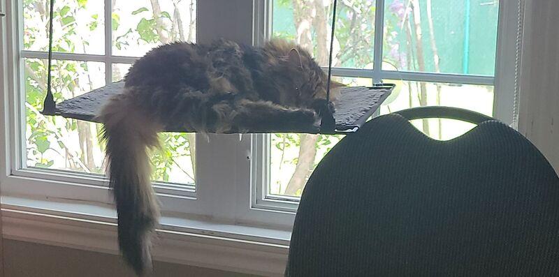 Les chats de Sacha
