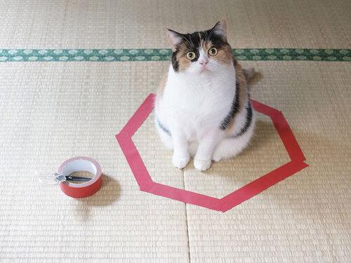 Comment piéger un chat en trois étapes faciles...!