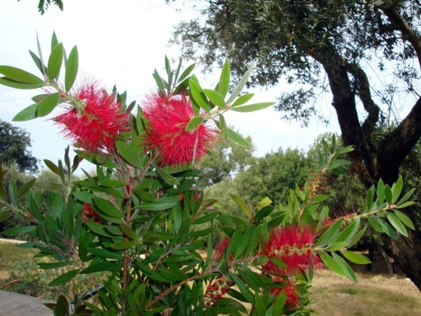 Anacapri, jardins de la Villa San Michelle 9a