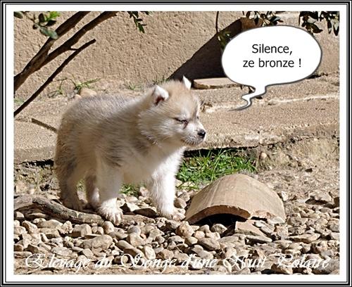 Humour de Husky (21 mars 2014)