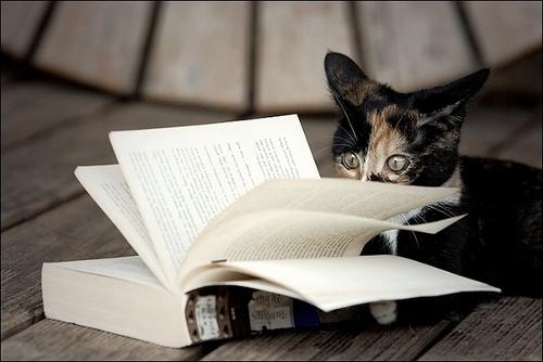 04 - Des chats passionnés, suite