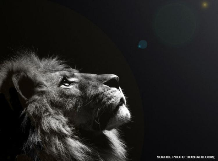 Lettre d'un lion au paradis...