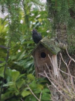 week end de comptage des oiseaux LPO