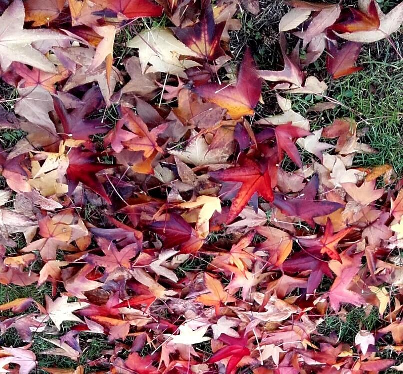 Tapis d'automne - juste avant que les employés de la ville les ramassent !