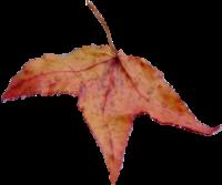 Tubes feuilles d' Automne et Chardonneret