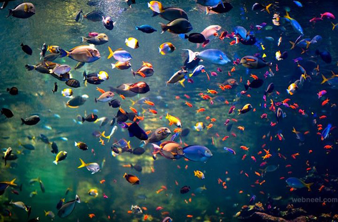 colorful underwater fish