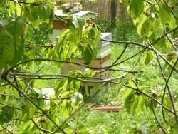 le rucher du gué