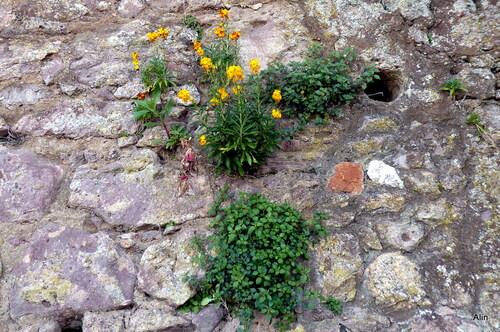 Le printemps des murs !