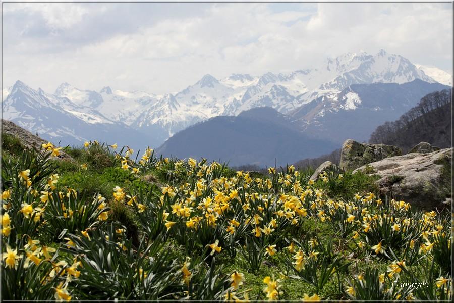 Dans les hautes-Pyrénées...1- Le balcon du Pibeste et le pic d'Alian