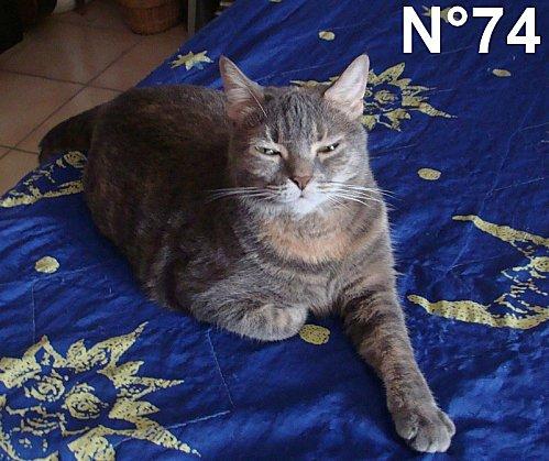 chat3-SISSI------A-Cotel--n-74.jpg