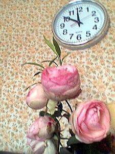 Roses de midi moins dix