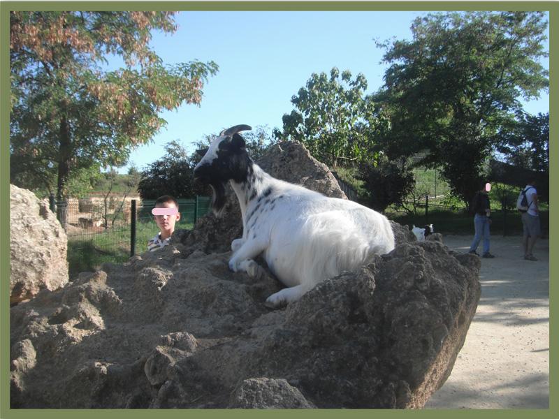 49700 Zoo Doué la Fontaine