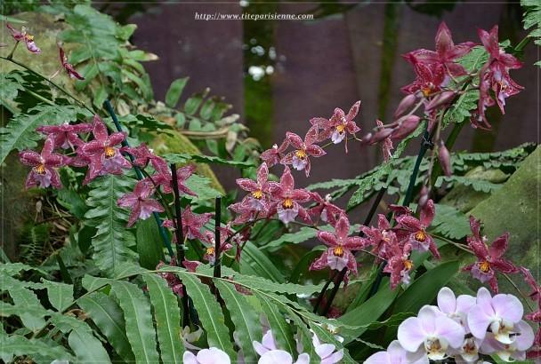 Jardin des Plantes 1 000 orchidées 5