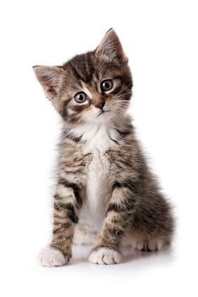 pipi de chat