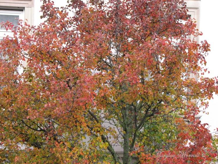 Ingersheim : Automne au jardin