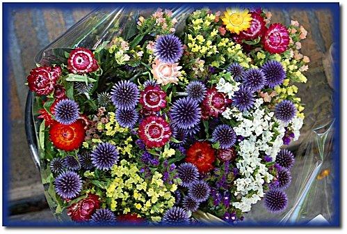 marche-fleurs-5.JPG