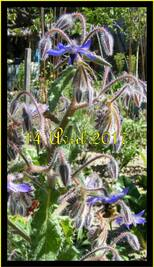Jardiner avec la Lune du 1er au 10 Mai 2017