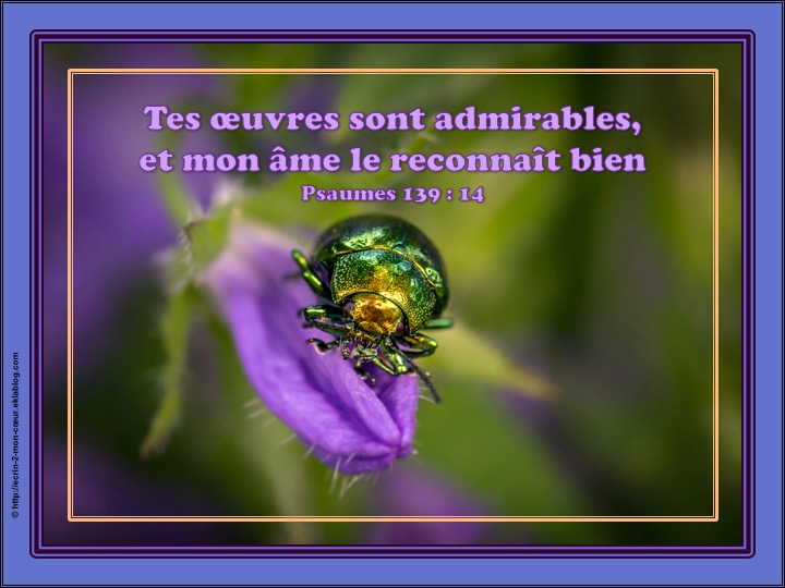 Tes oeuvres sont admirables - Psaumes 139 : 14
