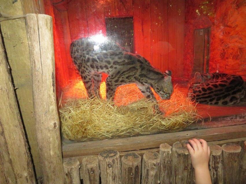Le zoo de la Boissière du Doré