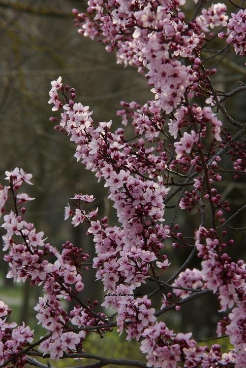 petite touche de printemps