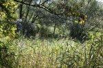 Le marais du Grand Saulcy ou des vieilles eaux