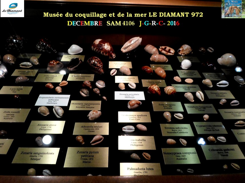 Le monde des coquillages de mer   4/5  9/    LE DIAMANT MARTINIQUE       D    29/10/2017