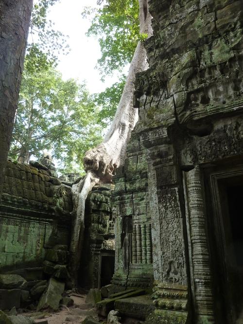 Ta Prohm, et ses arbres monstrueux
