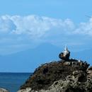 La sentinelle - Nord Caraïbe, Anse Céron - Photo : Hervé