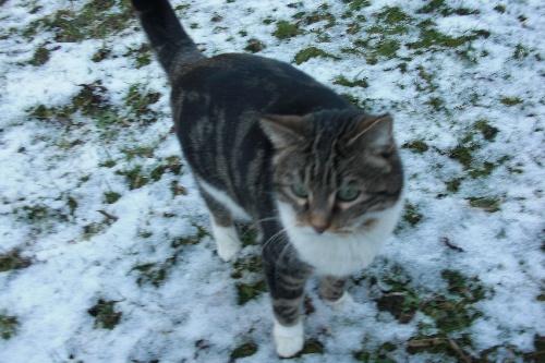 mila dans la neige