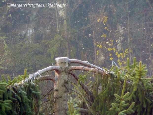Gelée blanche - White frost