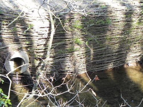 Parc Botanique de Brest Mars 2015