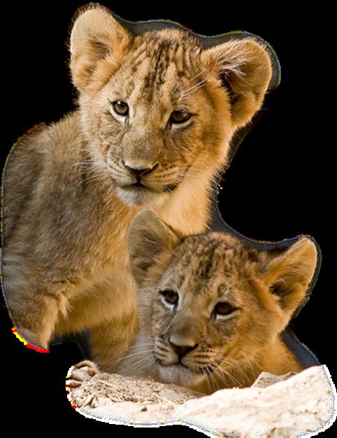 Lions Série 2