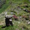 Mon cairn au petit col qui marque le début de la crête (2140 m)
