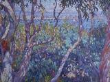 Eucalyptus, T. van Rysselberghe