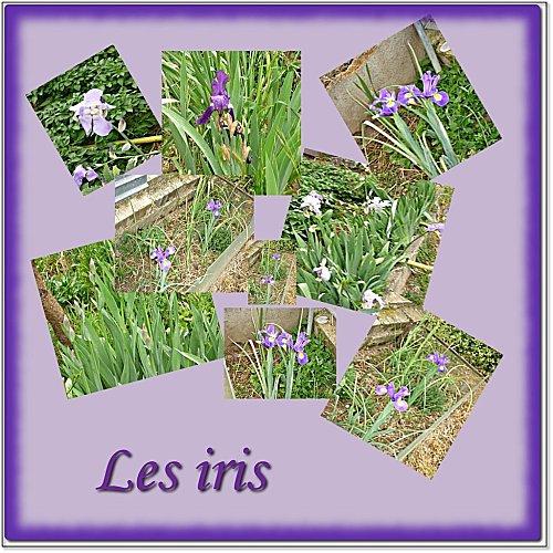 montage-iris.jpg