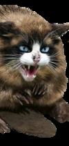 castor-chat