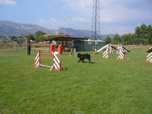 Education Canine (Septembre 2008)