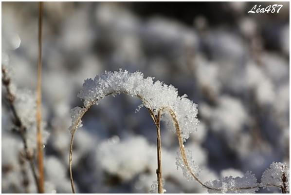 Nature-2-9666-neige-sur-tige-en-rond.jpg