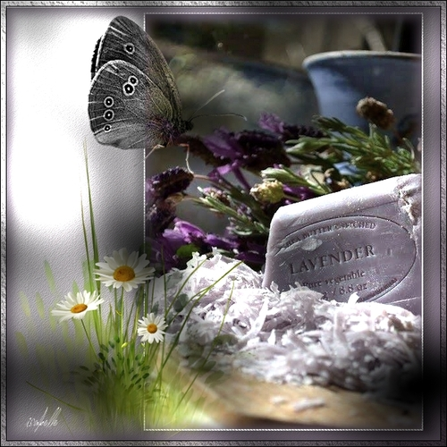 * Lavender *