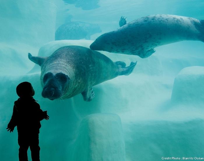 Les Plus Beaux Aquariums De France  Par Aurélie Tiercin Du Magazine Détours En France
