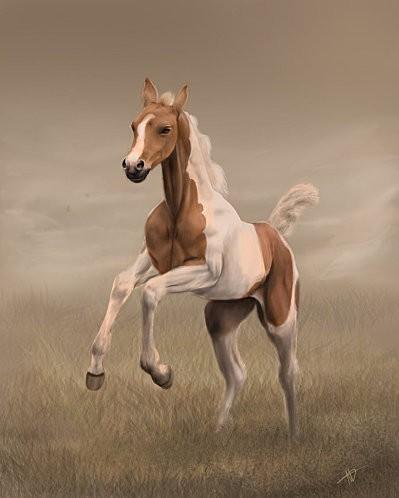 free foal by grayowl-d4f5e2b