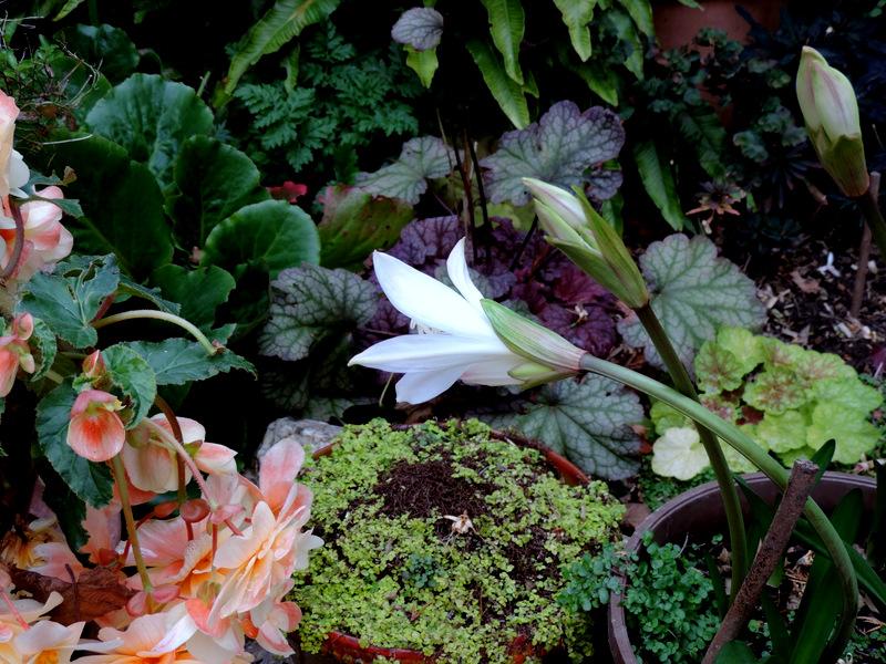 Novembre au jardin...