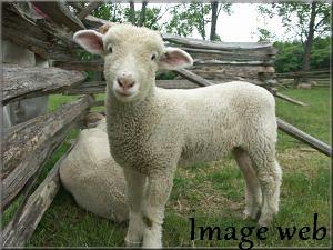 Pour Mildéfis 203 : début mai : BB animaux de la ferme