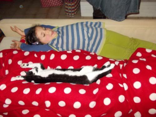 Les chats, des dormeurs.