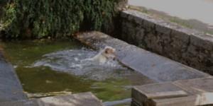 CHIEN FOX BASSIN (2)