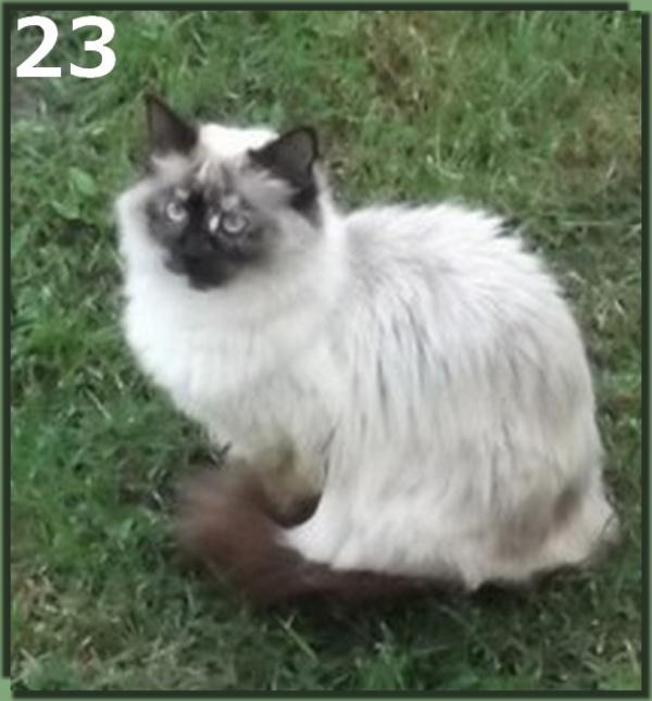 Les derniers candidats au concours du plus beau Chat ...