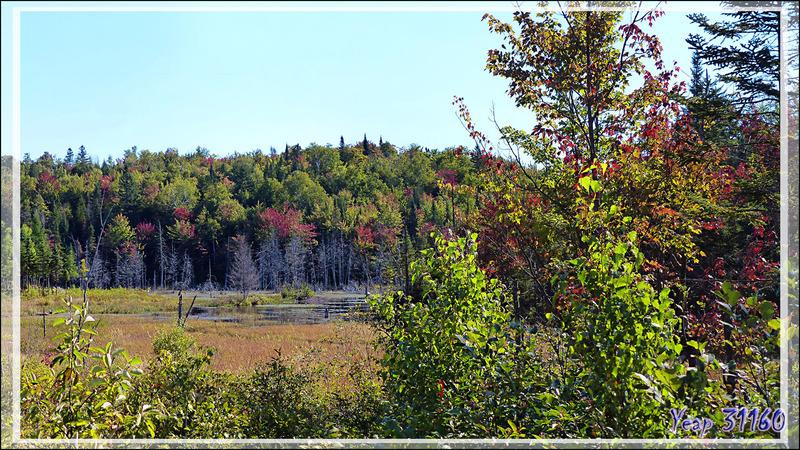Débuts de couleurs d'automne sur la route vers Grandes-Piles - Lanaudière - Québec - Canada