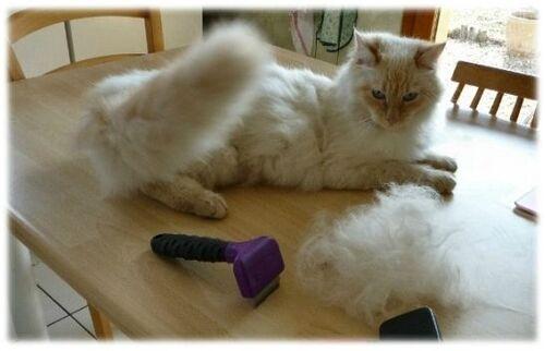 Boules de poils